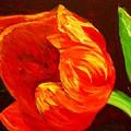 Parrot Tulip by Karen McNamara