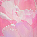 Pastel Pink Petals by Chris Lord