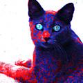 Patriotic Cat by BadAss Cats