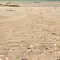 Patterns In The Sand by Colette Panaioti