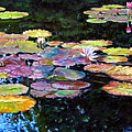 Peace Among The Lilies by John Lautermilch