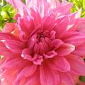 Peacefully Pink At Dawn by Cathy Sosnowski
