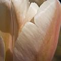Peach Tulip by Teresa Mucha
