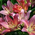Peachy Pink Lilies by Martha Johnson