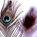 Peacock 8 - Doppleganger by Stormshade Designs