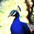 Peacock by Dave Kimbrell