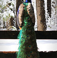 Peacock In The Snow by Tina Meador