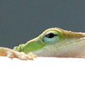 Peek-a-boo Lizard by Stephanie Lanoue