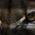 Peering Eyes by Keith Lovejoy