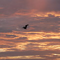 Pelican In Painted Sky by Michael Vanatta