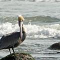 Pelican Rock by Jeff Cornette  InTheZonePhotography