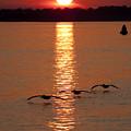 Pelican Sunset by Dustin K Ryan