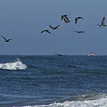 Pelicans Over The Atlantic by Teresa Mucha