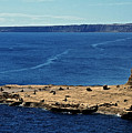 Peninsula De Valdez by Juergen Weiss