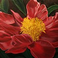 Peony Japonica by Robert Tower
