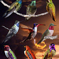 Perched Hummingbird Collage by David Salter