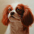 Pet Portrait Of A Cavalier King Charles Spaniel by Eric Bossik
