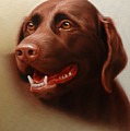 Pet Portrait Of A Chocolate Labrador by Eric Bossik