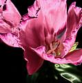 Pflower Pfunn by Sheryl Thomas