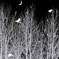 Phantom Birds by Will Borden