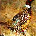 Pheasant by William Martin
