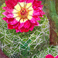 Pincushion Cactus by Eric Samuelson