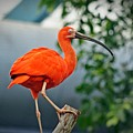 Pink Bird by Joann Mitchell