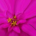 Pink by Ernie Echols