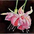 Pink Fuscia by Carol Sabo