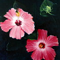 Pink Hibiscus by Bonnie Haversat