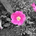 Pink by Jessica Burgett