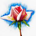 Pink Rose by Svetlana Sewell
