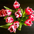 Pink Tulips by Fanny Diaz