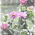 Pink Zinnias by Susan  Lipschutz