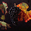 Pinot Noir Grape With Autumn Leaves by Takayuki Harada