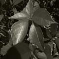Platinum Leaves 2 by Jeff Breiman