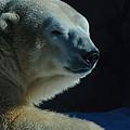 Polar Bear by Galeria Trompiz