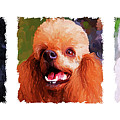Poodle Trio by Jai Johnson