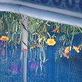 Pool Garden by Amy Holmes