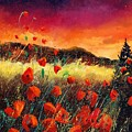 Poppies At Sunset 67 by Pol Ledent