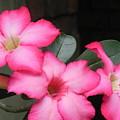 Poppin Pink Flowers by Chrisann Ellis