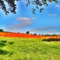 Poppy Field by Sitara Bruns