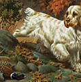 Portrait Of A Clumber Spaniel Hunting by Walter A. Weber