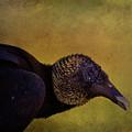 Portrait Of A Vulture by Deborah Benoit