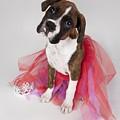 Portrait Of Dog Wearing Tutu by Leah Hammond