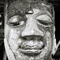 Portrait Of The Buddha by Shaun Higson