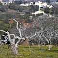 Portuguese Almond Plantation by Heiko Koehrer-Wagner