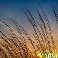 Prairie Grass Sunset by Steve Gadomski