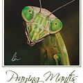 Praying Mantis Poster by Cindy D Chinn