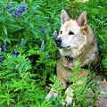 Pretty Dog by Crystal Garner
